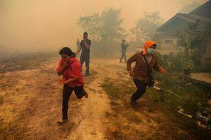 Hình ảnh hoang tàn từ thảm họa cháy rừng ở Indonesia