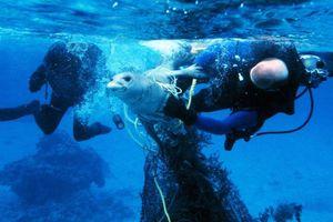 Ấn tượng chùm ảnh 'Bơi cùng sinh vật biển'