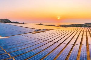 Giá điện mặt trời 'giảm sốc', nhà đầu tư vẫn hào hứng