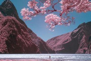 Bạn sẽ vô cùng ngạc nhiên khi xem những bức ảnh về đất nước New Zealand đẹp mộng mơ qua máy ảnh 'đặc biệt'