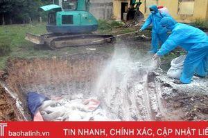 Dịch tả lợn châu Phi diễn biến phức tạp, 28.000 con lợn ở Vũ Quang bị đe dọa