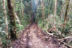 Theo dấu con đường vào 'thủ phủ' lâm tặc tàn phá rừng Kon Plong