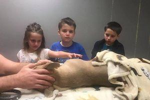 Chú chó mất mạng khi bảo vệ chủ khỏi bị rắn độc cắn