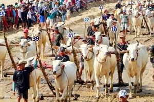 30 nghìn khán giả cổ vũ Hội đua bò Bảy Núi