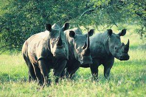 Đại sứ quán Nam Phi phát động cuộc thi viết 'Người thay đổi nhận thức về động vật hoang dã'