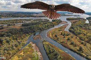 Chim ưng phản ứng bất ngờ lần đầu đụng độ flycam