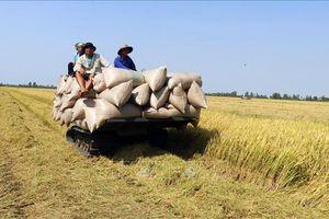 Dự báo nhiều khó khăn trong sản xuất lúa Đông Xuân 2019 - 2020