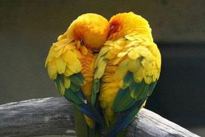 Top 10 động vật nói không với chuyện 'ngoại tình'