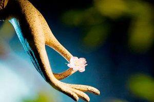 Phật dạy: Con người nếu thay đổi 2 thói nghĩ sau, vận số sẽ lập tức hanh thông