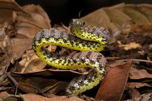 Những loài rắn kỳ dị nhất thế giới tại Việt Nam
