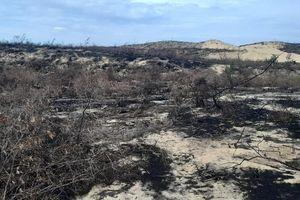 Vụ 140 ha rừng biến mất ở Bình Định: Tạm dừng dự án nhà máy điện