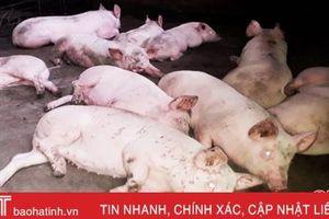 Hơn 10 tỷ đồng vốn vay chăn nuôi lợn ở Hà Tĩnh được cơ cấu lại thời gian trả nợ
