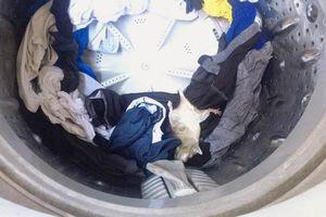 Mở máy giặt cho khô ráo, chàng trai sốc nặng thấy thứ 'dị'...