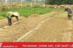 Diện tích cây vụ Đông mới đạt 25%, Chủ tịch UBND tỉnh yêu cầu đẩy nhanh tiến độ