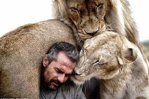 Ly kỳ sự gắn bó giữa người và sư tử hoang dã