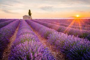 Những cánh đồng hoa đẹp nhất thế giới khiến ai cũng phải ngẩn ngơ