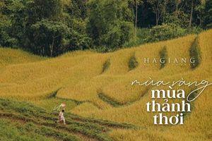 Nhiếp ảnh gia trẻ Sài thành mê đắm mùa vàng Hà Giang