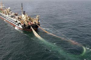 Siêu tàu khổng lồ chạy đua vét cá vược vùng biển Anh trước Brexit