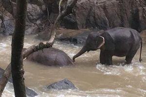 6 con voi ngã chết khi cố cứu nhau ở thác tử thần