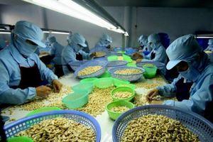 Trung Quốc ăn nhiều hạt điều Việt vì thương chiến căng thẳng