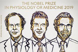 Xướng tên 3 nhà khoa học giành giải Nobel Y học