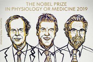 Nobel Y sinh 2019 vinh danh các nhà khoa học Mỹ, Anh