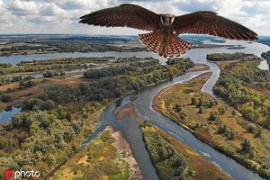 Chim ưng phản ứng bất ngờ lần đầu nhìn thấy flycam