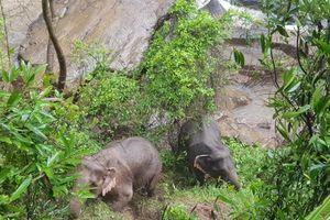 Đàn voi Thái Lan chết thảm khi cố gắng cứu con non khỏi thác nước