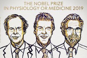 Giải Nobel Y học 2019: Mở đường cho chiến lược chống ung thư