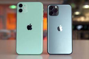 Doanh số Apple tại Việt Nam giảm nhẹ vì iPhone 11
