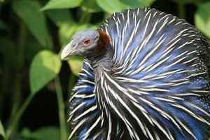 Sự thực bất ngờ sau những loài chim kỳ lạ nhất thế giới
