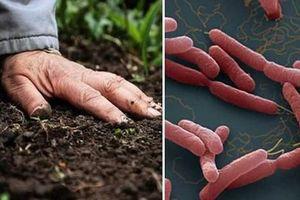 Bình Định: Điều trị thành công ca nhiễm vi khuẩn Whitmore