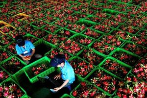 Xuất khẩu rau quả sang châu Âu cần lưu ý gì?