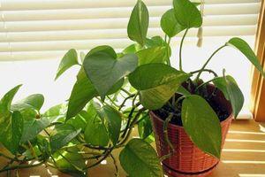 Trồng ngay 5 loại cây này để thanh lọc không khí trong nhà khi Hà Nội, Sài Gòn đang ô nhiễm nặng