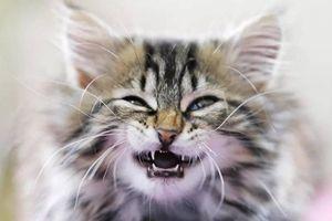 Người đàn ông ở Cà Mau tử vong sau 3 tháng bị mèo cắn