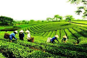 Thái Nguyên gia tăng giá trị sản phẩm địa phương