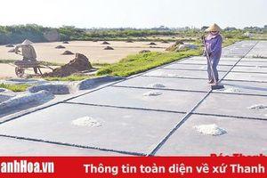 Xung quanh việc chuyển đổi nghề cho diêm dân Hậu Lộc