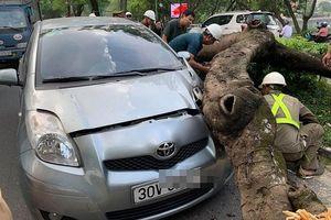Hà Nội: Cây xanh bất ngờ đổ xuống đường, đè bẹp ô tô trên đường Thanh Niên