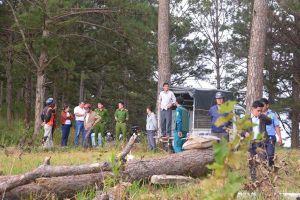 'Vẽ ra quy hoạch', diệt cây, phân lô bán đất rừng thông Đà Lạt