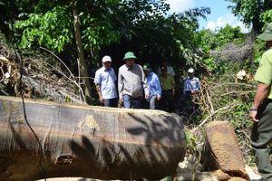 Hồi âm về vụ phá rừng tại Hòn Đác, Sơn Hòa