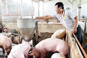 Giá lợn hơi sắp chạm ngưỡng 70.000 đồng một kg