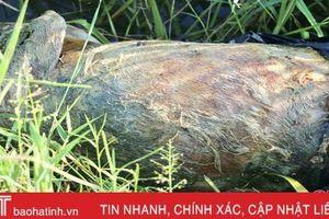 Rùng mình xác lợn chết trôi nổi trên kênh mương ở Cẩm Xuyên
