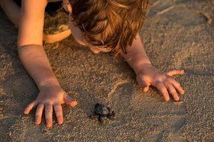 'Đột nhập' trung tâm nuôi dưỡng loài rùa có nguy cơ tuyệt chủng