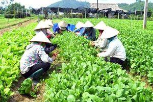 Yên Bái: Làn sóng khởi nghiệp từ HTX
