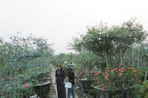 Kinh tế nhà vườn và nụ cười người trồng hoa