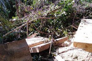 Phó Bí thư Tỉnh ủy Phú Yên kiểm tra hiện trường vụ phá rừng Hòn Đác