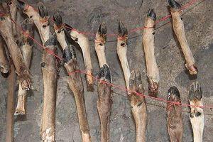 Phát hiện thêm bằng chứng về cách ăn uống của người cổ đại từ 400.000 năm trước