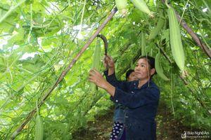 Những cách làm hay tăng thu nhập cho người dân ở huyện Anh Sơn