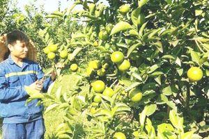 Quảng Ninh: Tạo việc làm cho người dân với HTX nông nghiệp