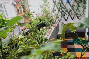 Ngôi nhà hạnh phúc thơm hương hoa hồng của cặp vợ chồng trẻ ở Thủ Đức, TP. HCM